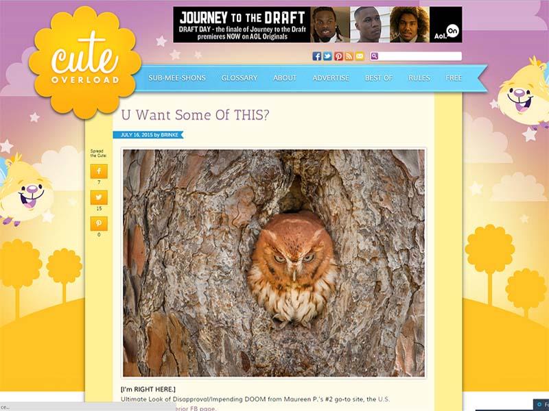 Cute Overload - Website Screenshot
