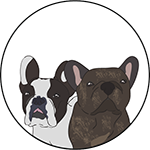 Two French Bulldogs - Author Pic